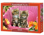 Puzzle Kittens on Garden Chair 1000,